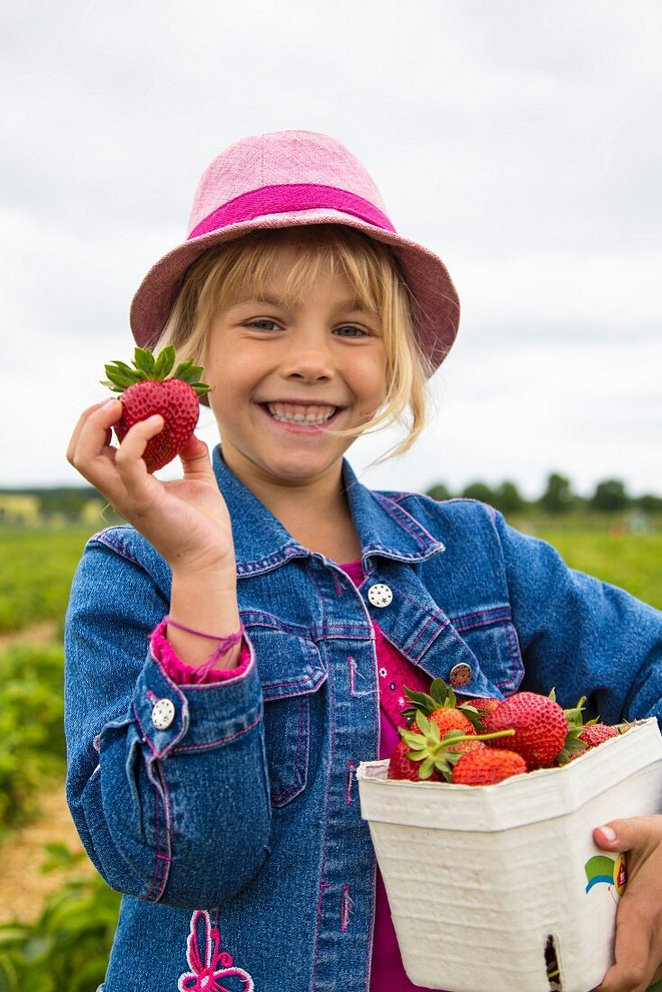 Portrait of proud little girl holding box and strawberryies on a strawberry field