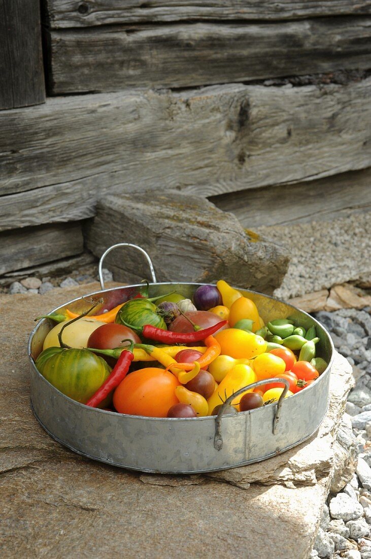 Freshly harvested garden vegetables