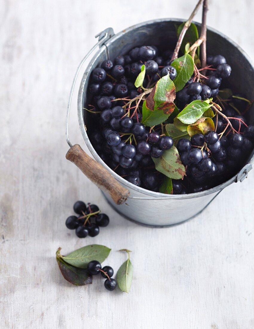 Aronia berries in a bucket