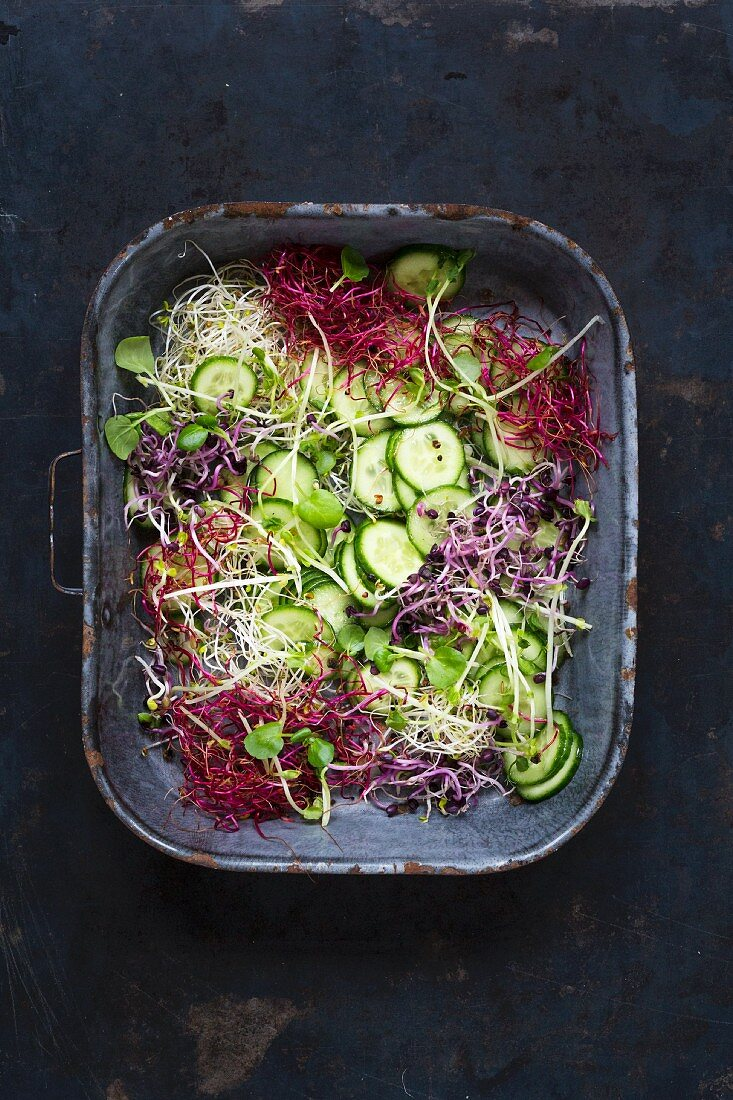Cucumber and sprout salad in an enamel tray on a dark background
