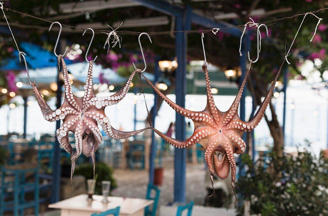 Squids displayed on hooks