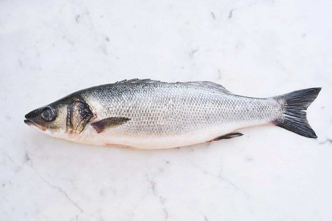 Branzino fish, European seabass