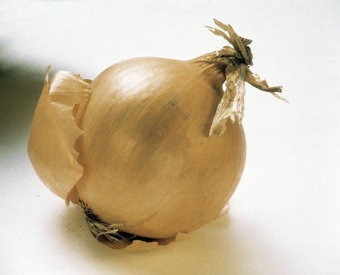 Single Yellow Onion with Skin