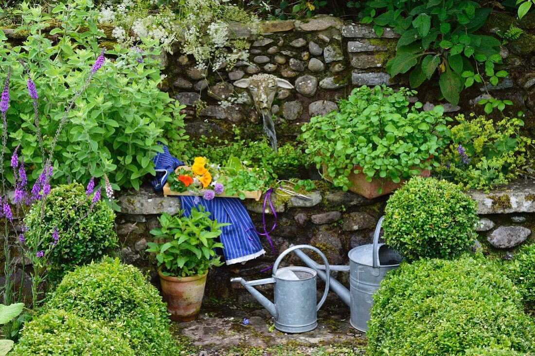 Crate of watercress next to stone water spout in herb garden