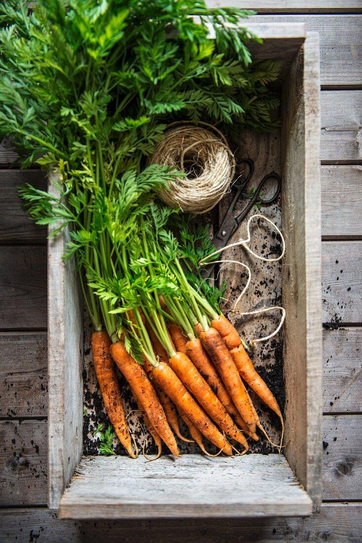 A bunch of carrots from a garden