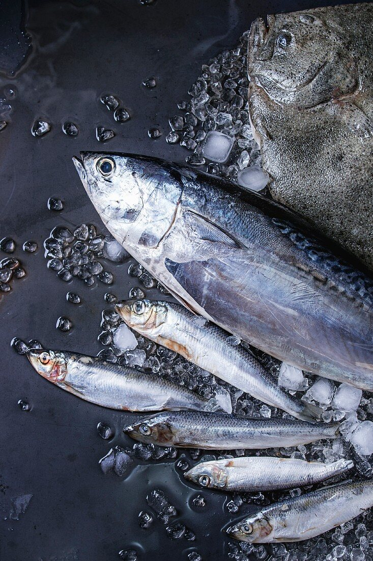 Raw fresh tuna, herring and flounder fish on crushed ice over dark wet metal background