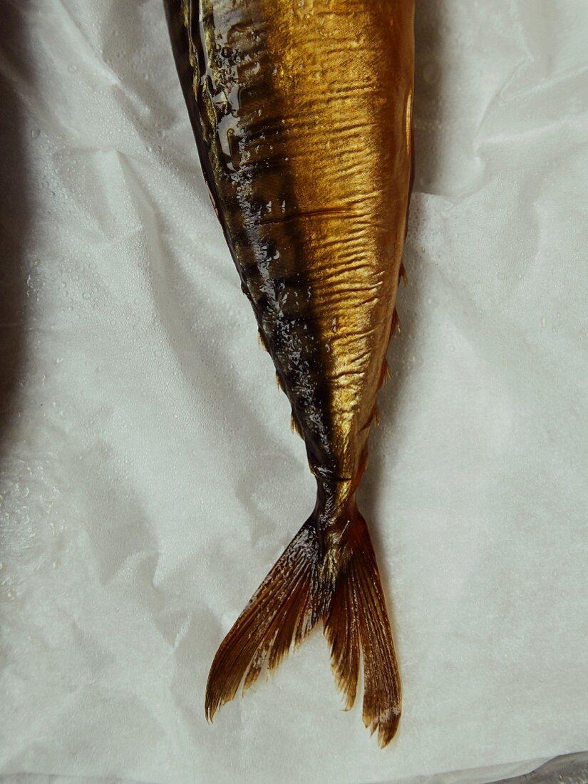Cured mackerel
