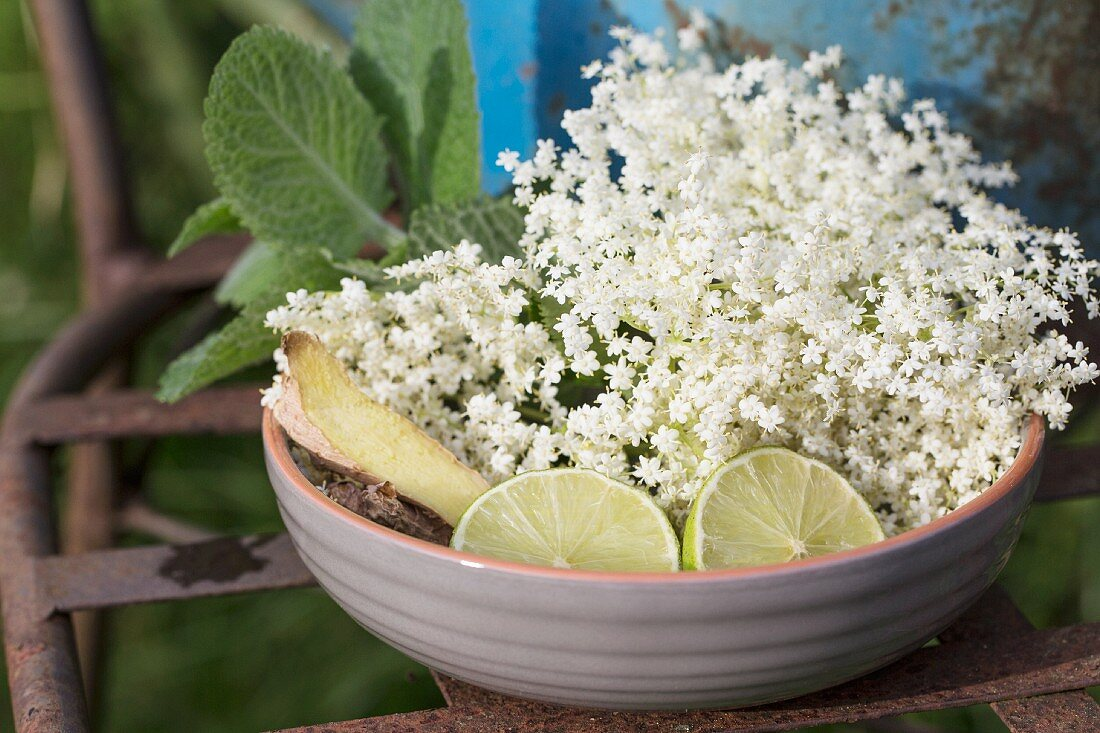 Ingredients for elderberry syrup: elderberry blossoms, limes, mint and ginger