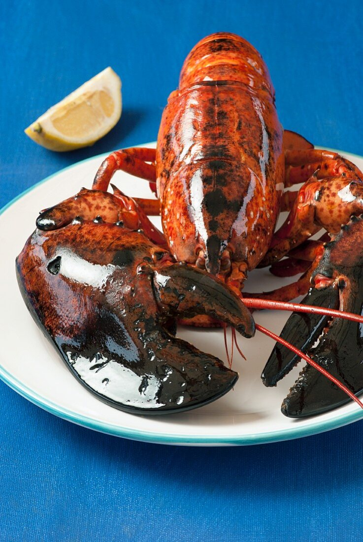 Lobster on platter