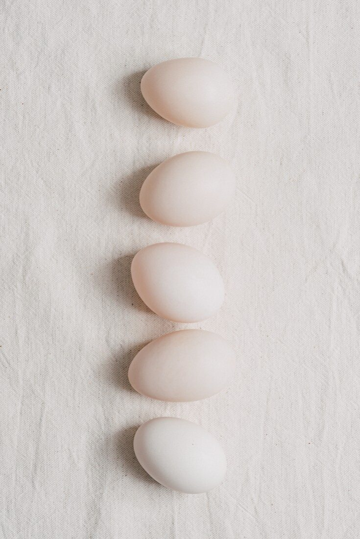 A row of six white duck eggs