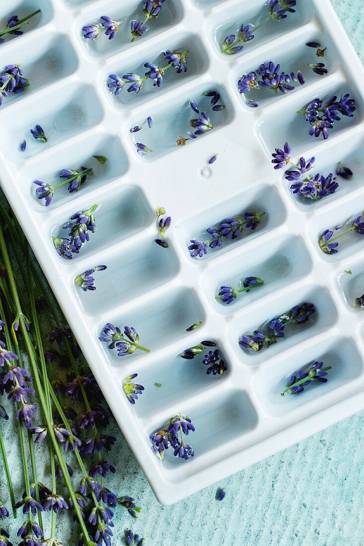Plastic mold with water for making ice cubes flavored with lavender flowers