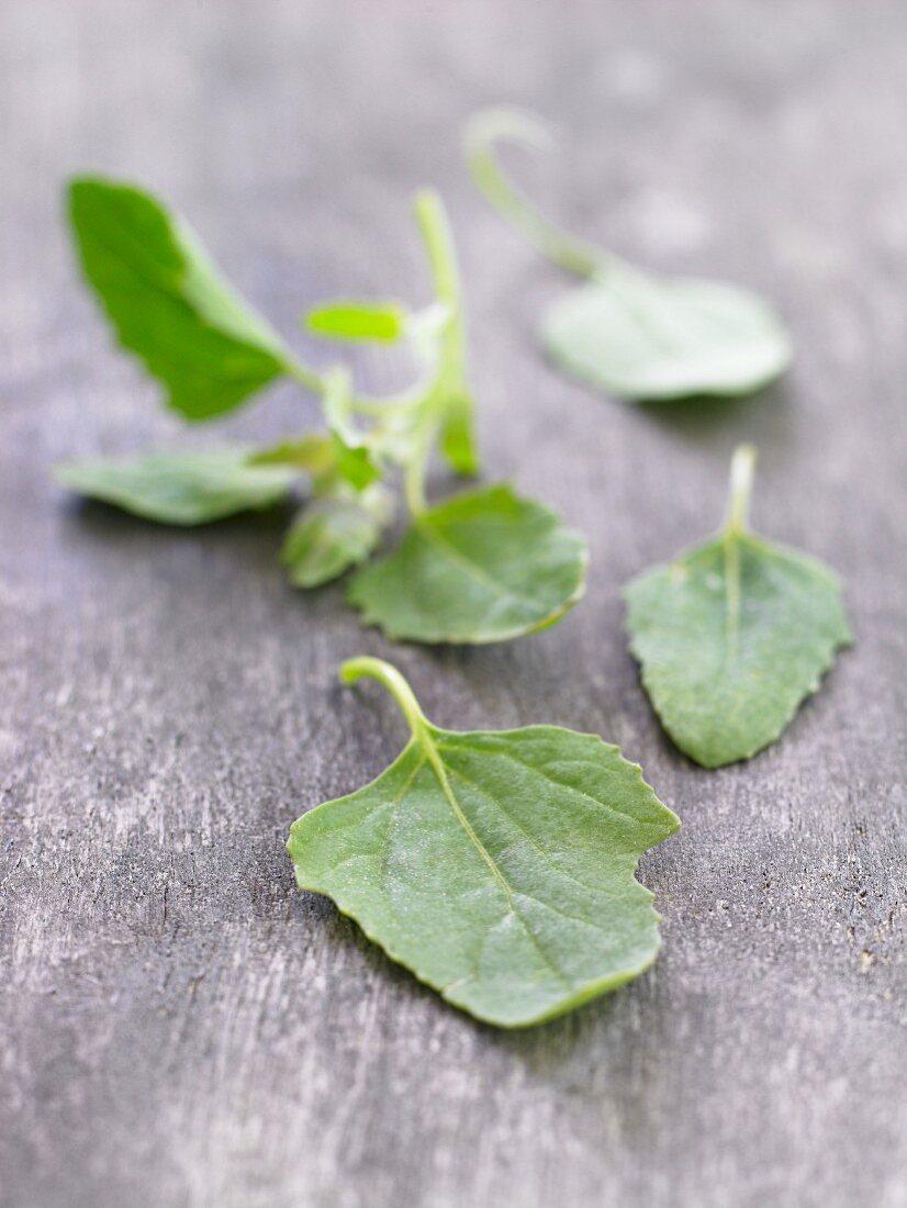 Fresh orache leaves