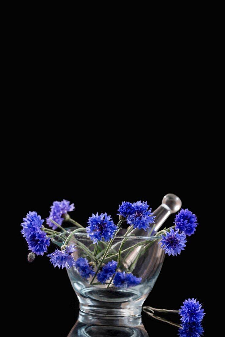 Blue cornflowers in a glass mortar
