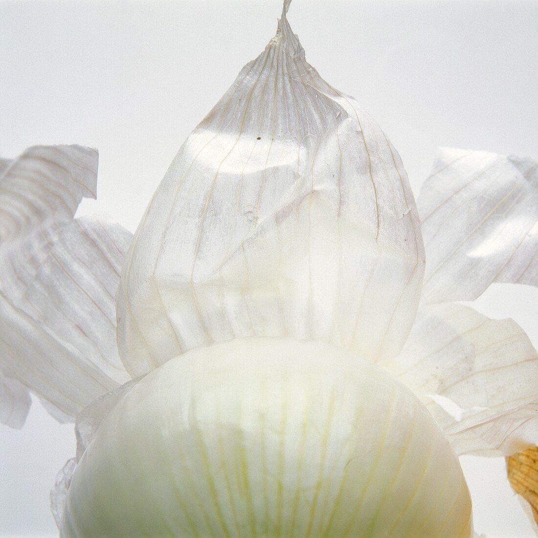 White Onion with Onion Skin