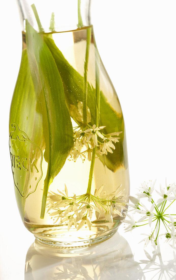 Homemade wild garlic vinegar with white balsamic vinegar, wild garlic leaves and flowers in a preserving bottle