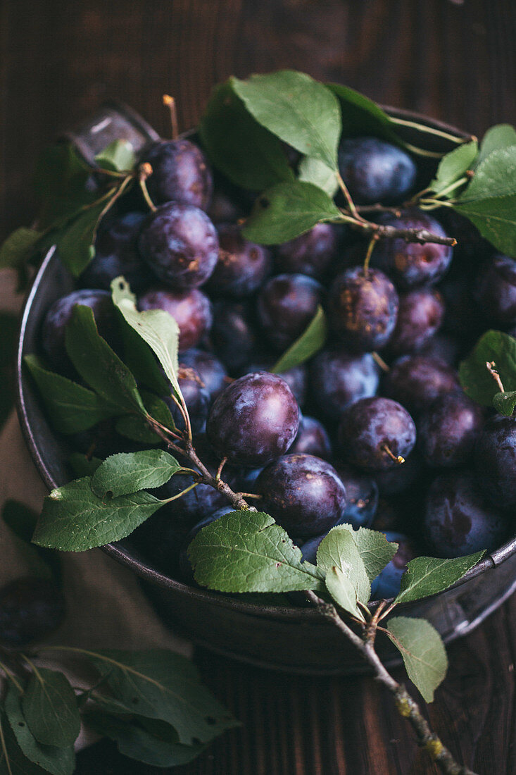 Damsons with leaves in a container on a dark wooden surface