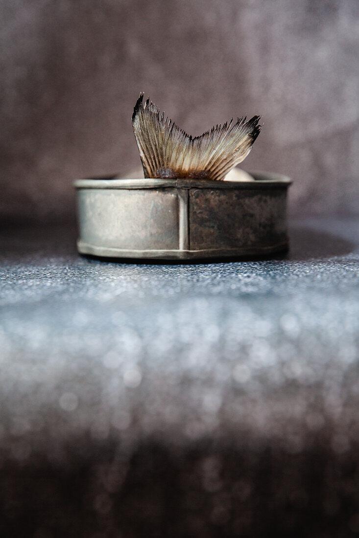 Dorade in a vintage tin