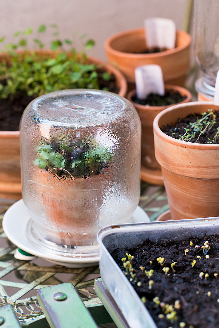 Cultivating Cultivating microgreens