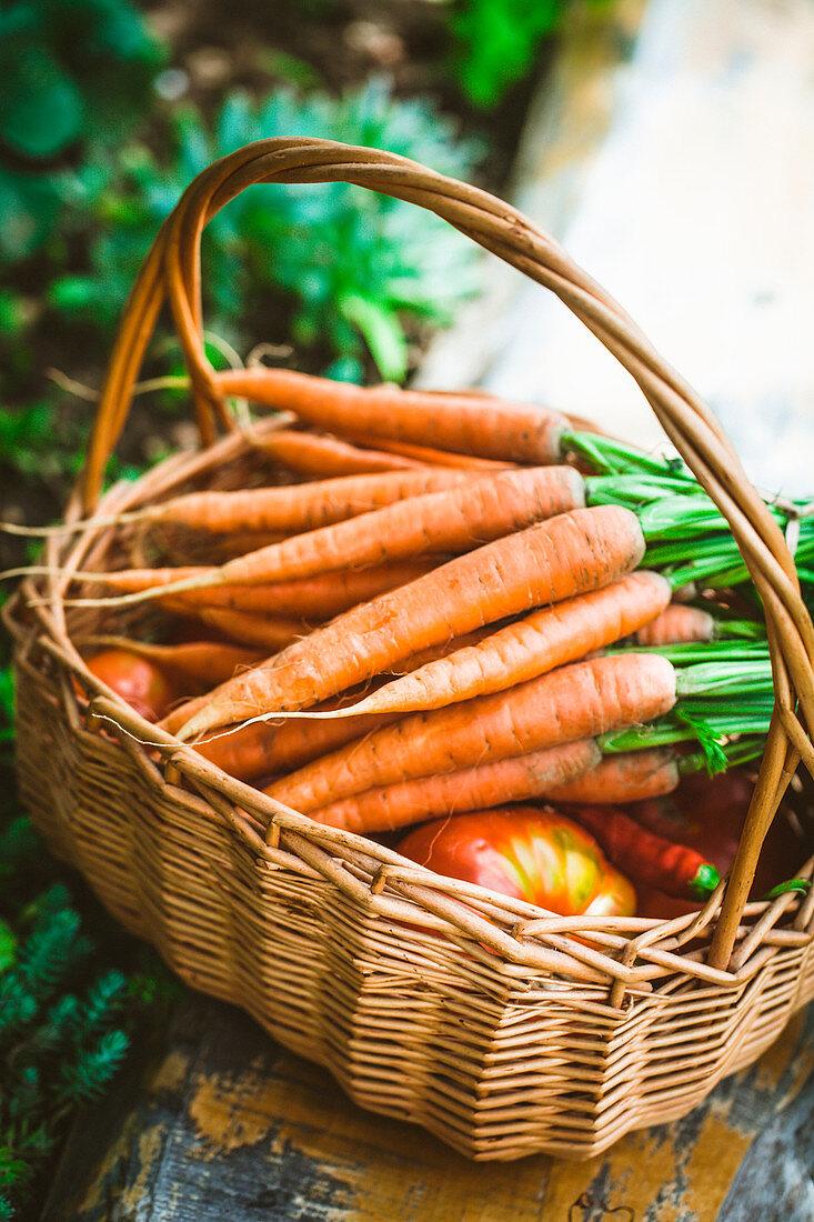 Frisch geerntetes Gemüse im Weidenkorb