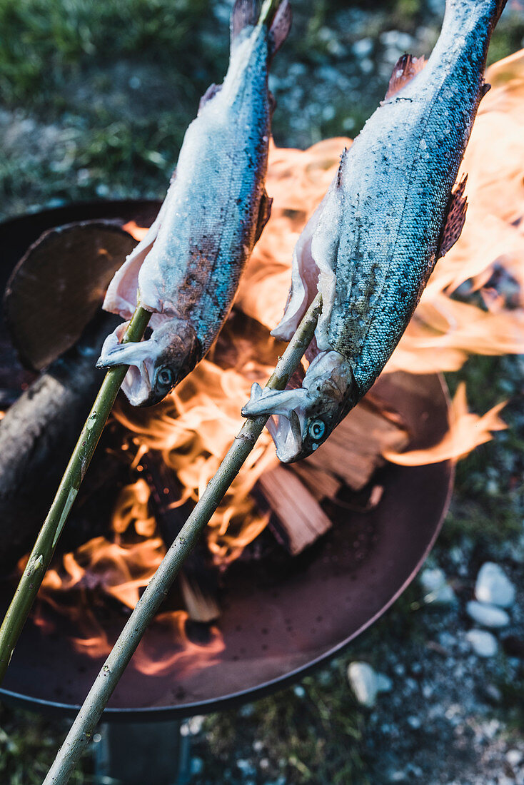 Fish being grilled on sticks