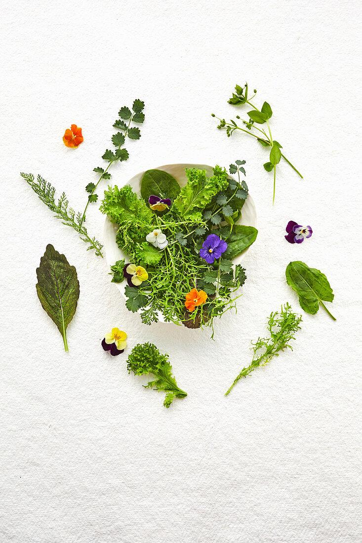Various edible wild herbs, mustard leaves and flowers