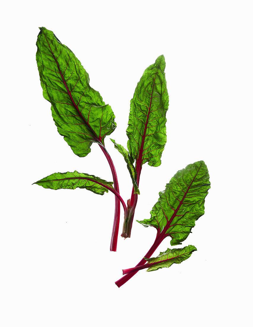 Red-stemmed chard leaves