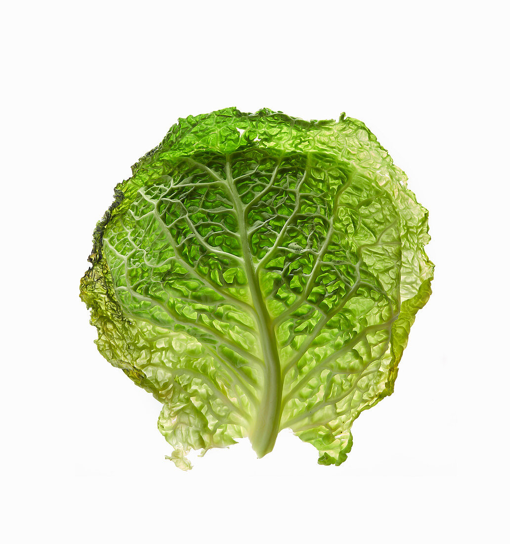 Two Fresh Savoy Cabbage Leaves on White