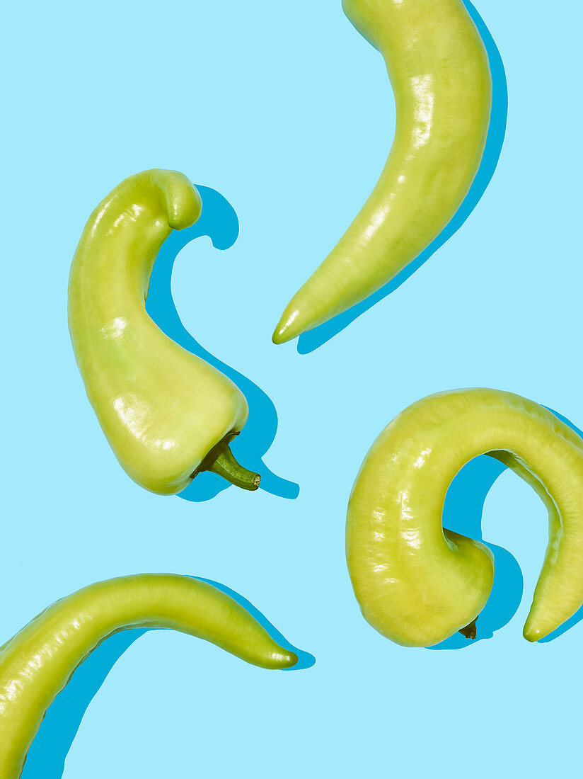 Bullhorn chilli peppers on a light blue surface