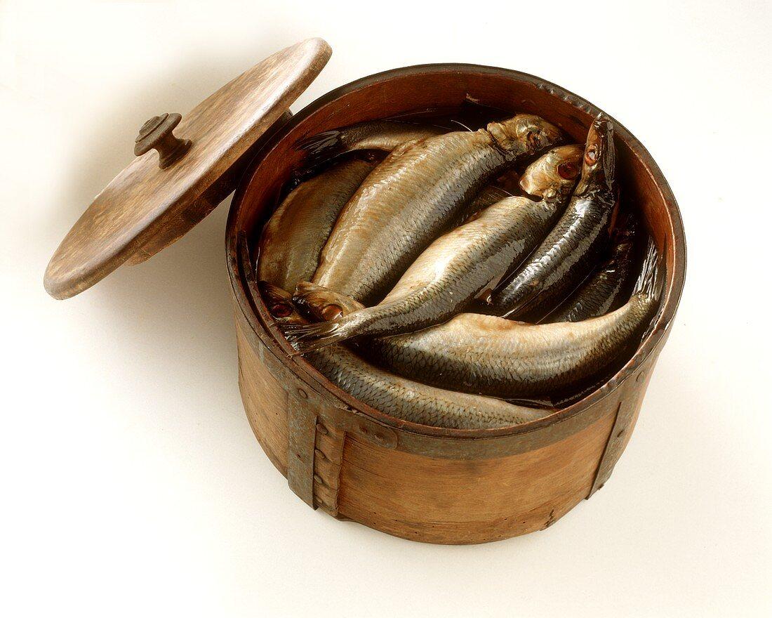 Pickled herrings (maties) in a wooden barrel