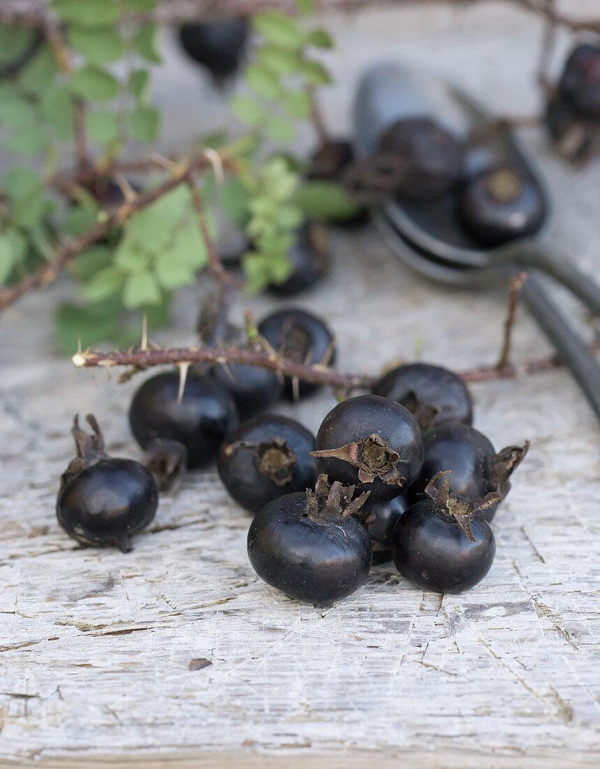 Black rose hips on a wooden background