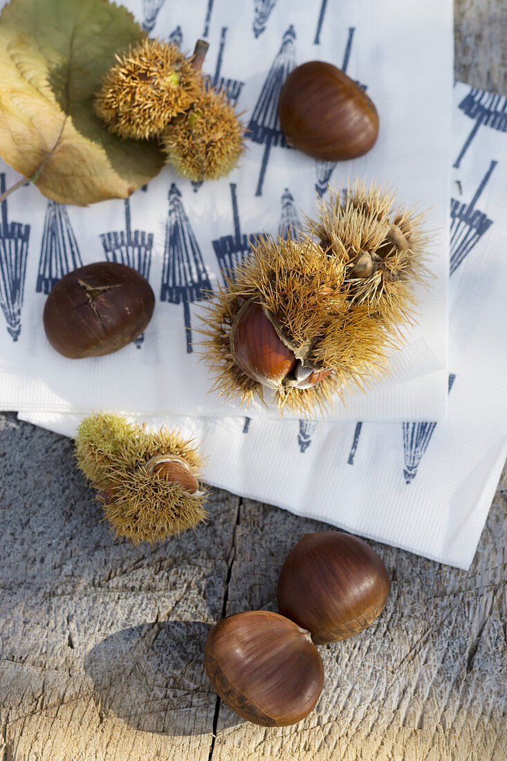 Chestnuts on Japanese paper