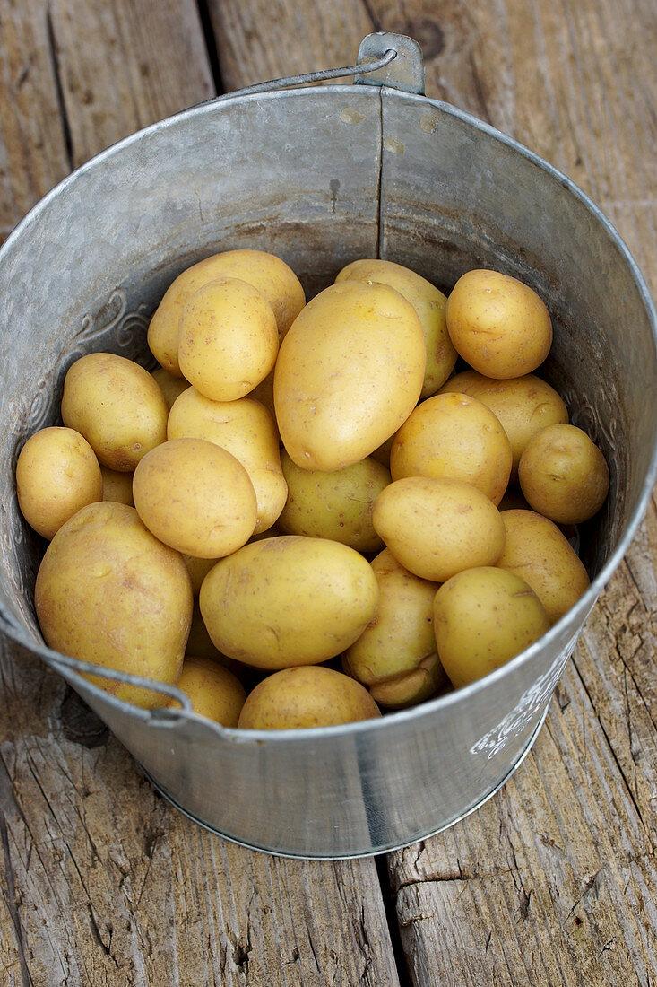 Potatoes in a zinc bucket