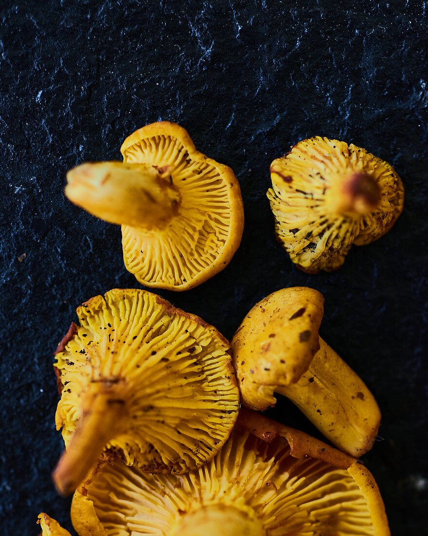 Fresh forest chanterelle