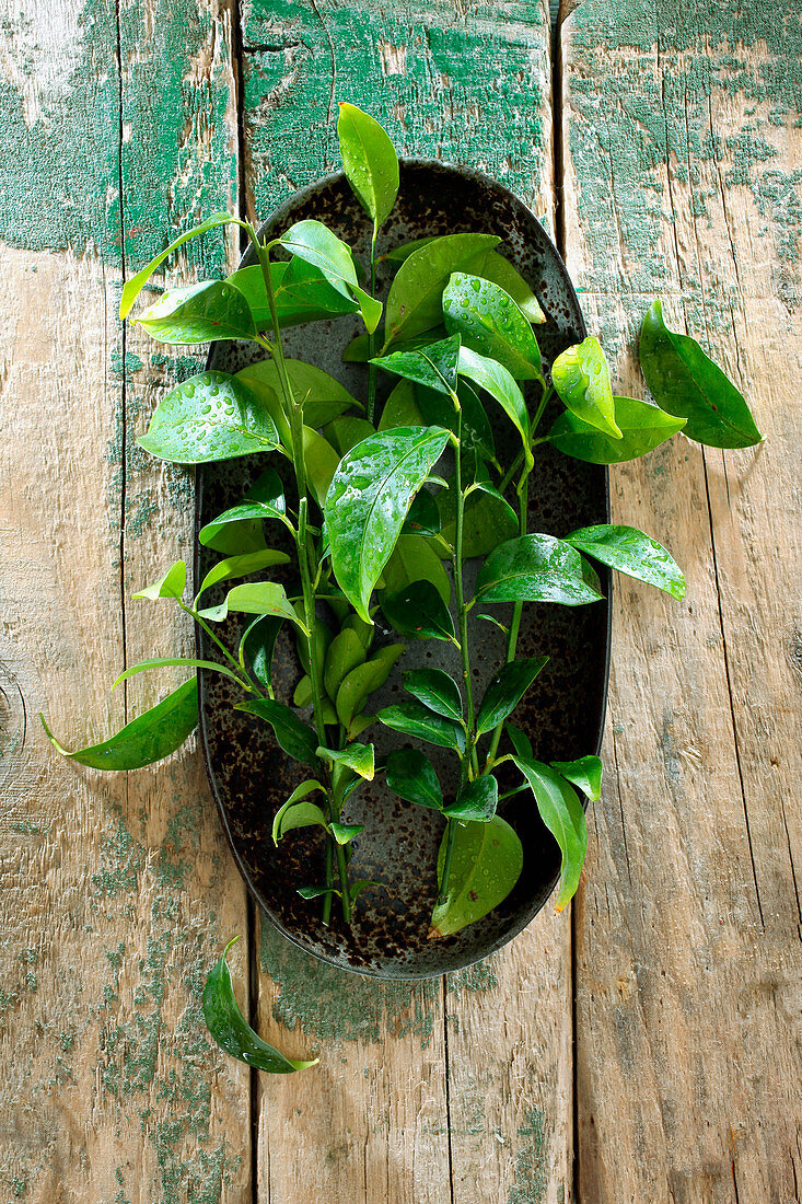 Kaffir lime leaves in a bowl on a wooden background