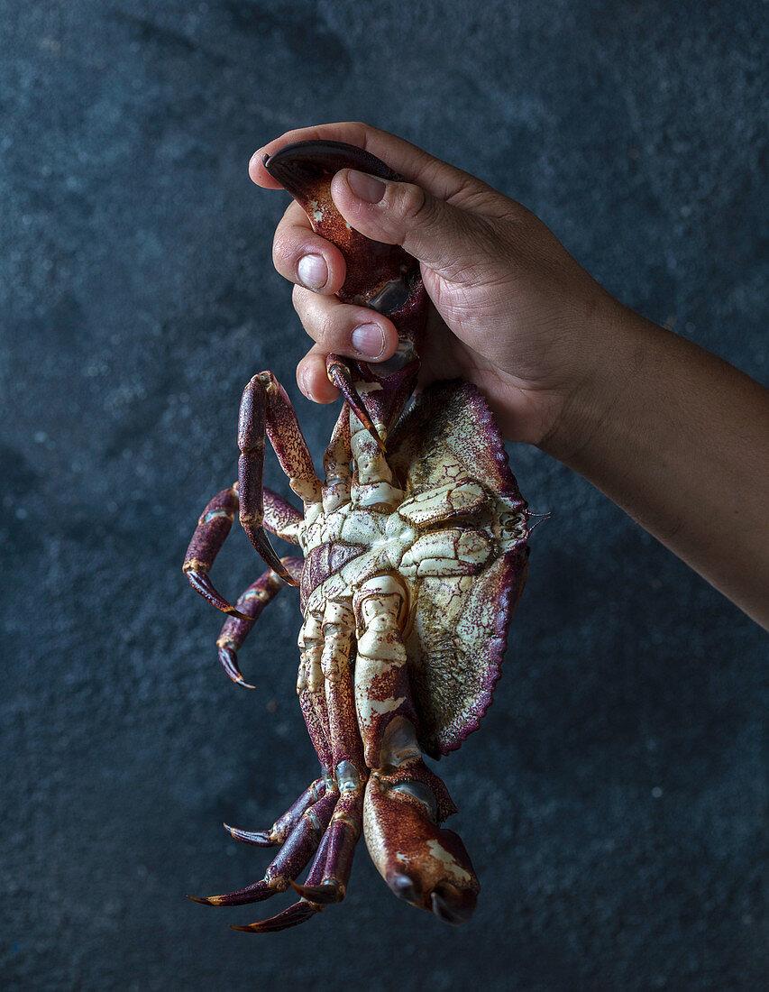A hand holding a fresh crab