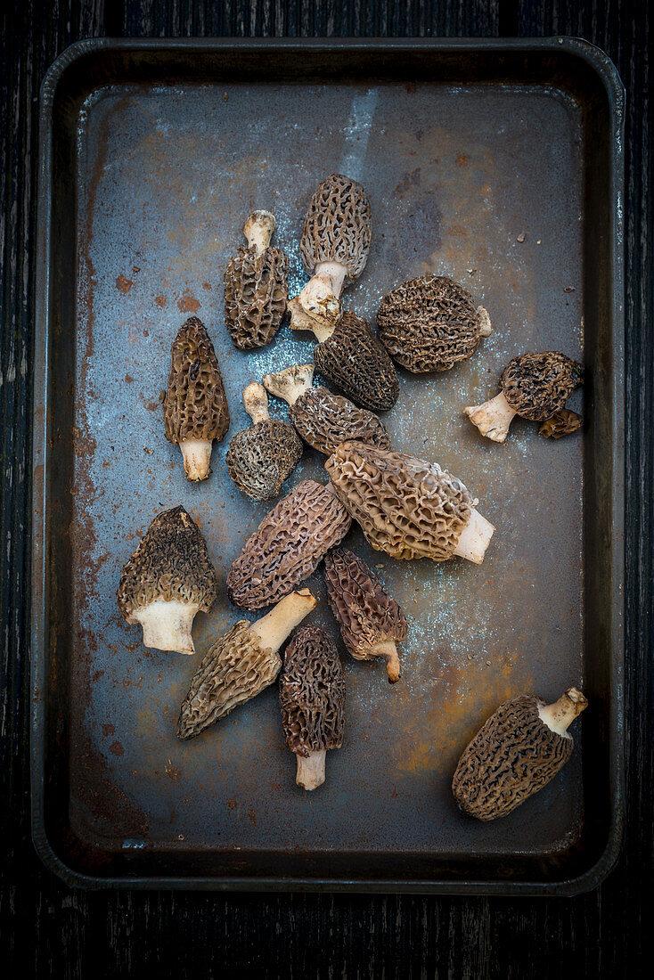 Frische Morcheln auf rostigem Ofenblech