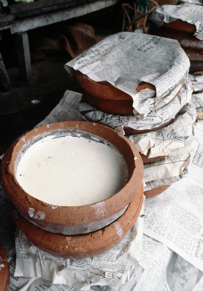 Yoghurt sold in clay bowls at a market in Colombo, Sri Lanka