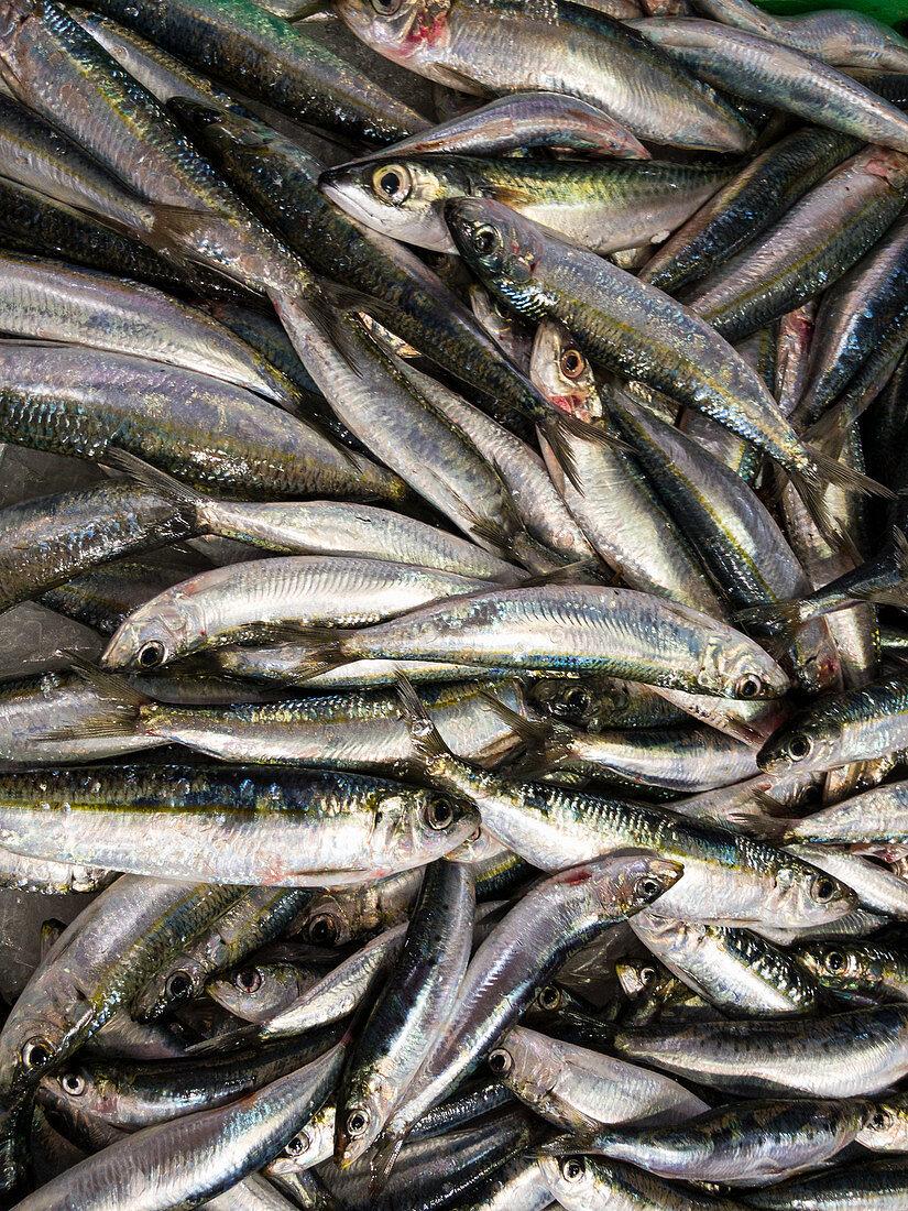 Anchovies at a fish market (full screen)