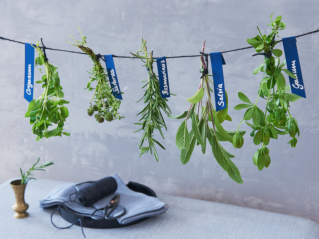 Hanging edible herbs to dry