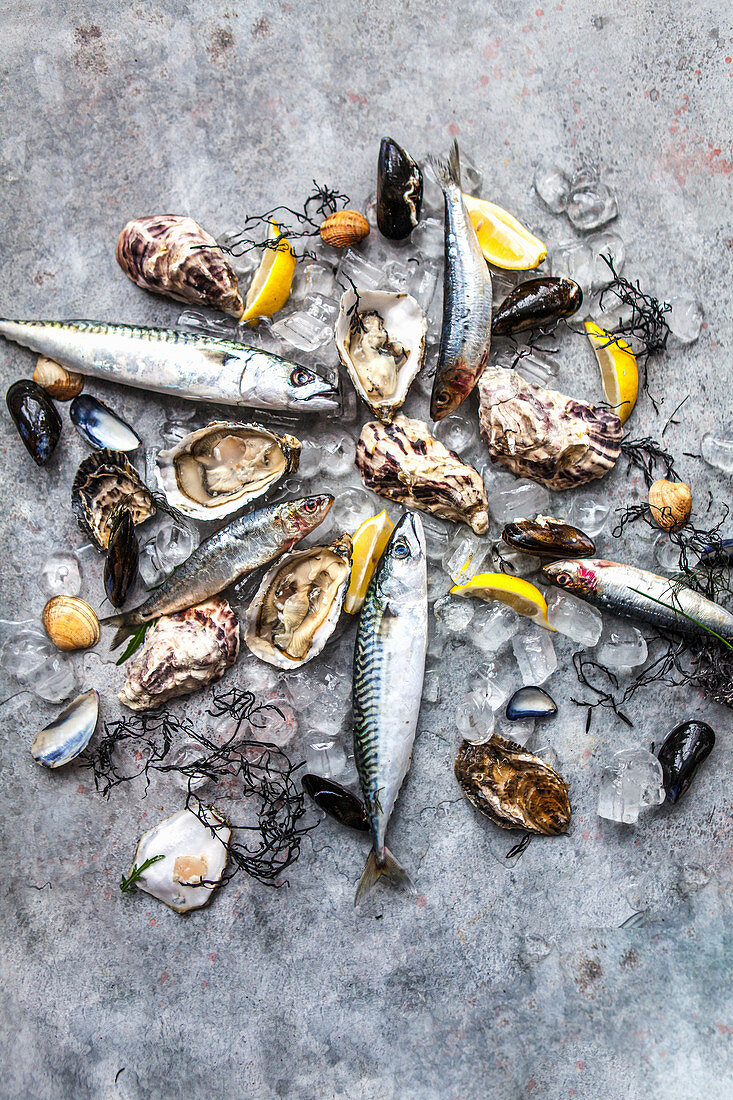 Clams, herrings, mackerels, mussles and oysters on ice