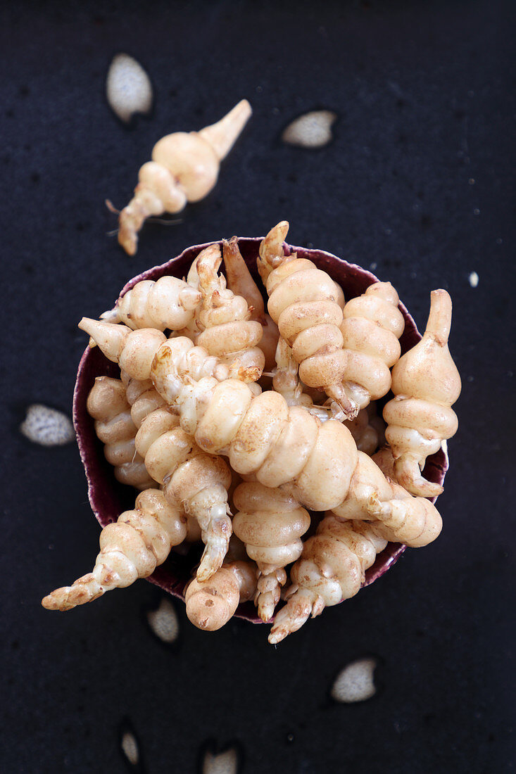 Chinese artichokes (Stachys affinis)