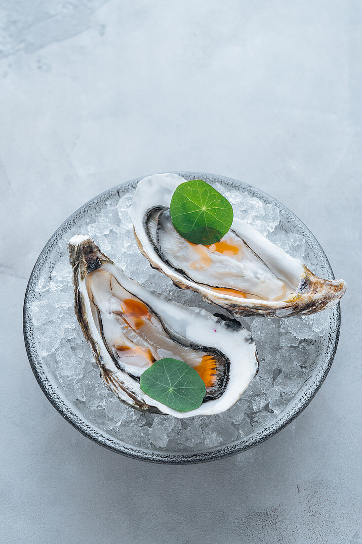 Oysters on Ice cube on a bowl in a white background