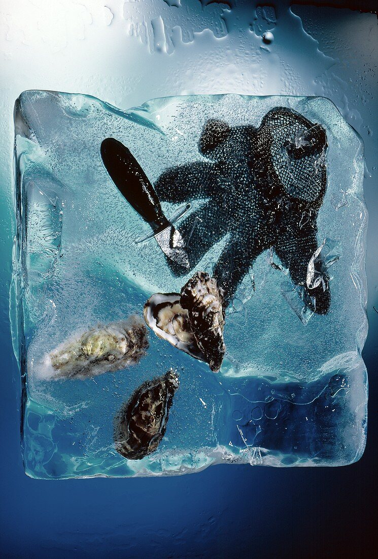 Oysters in an Ice Block with Knife and Glove