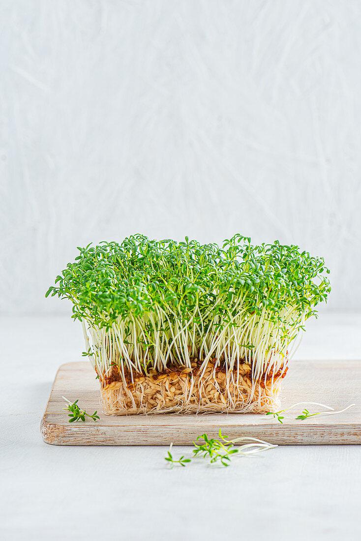 Microgreens, greek cress
