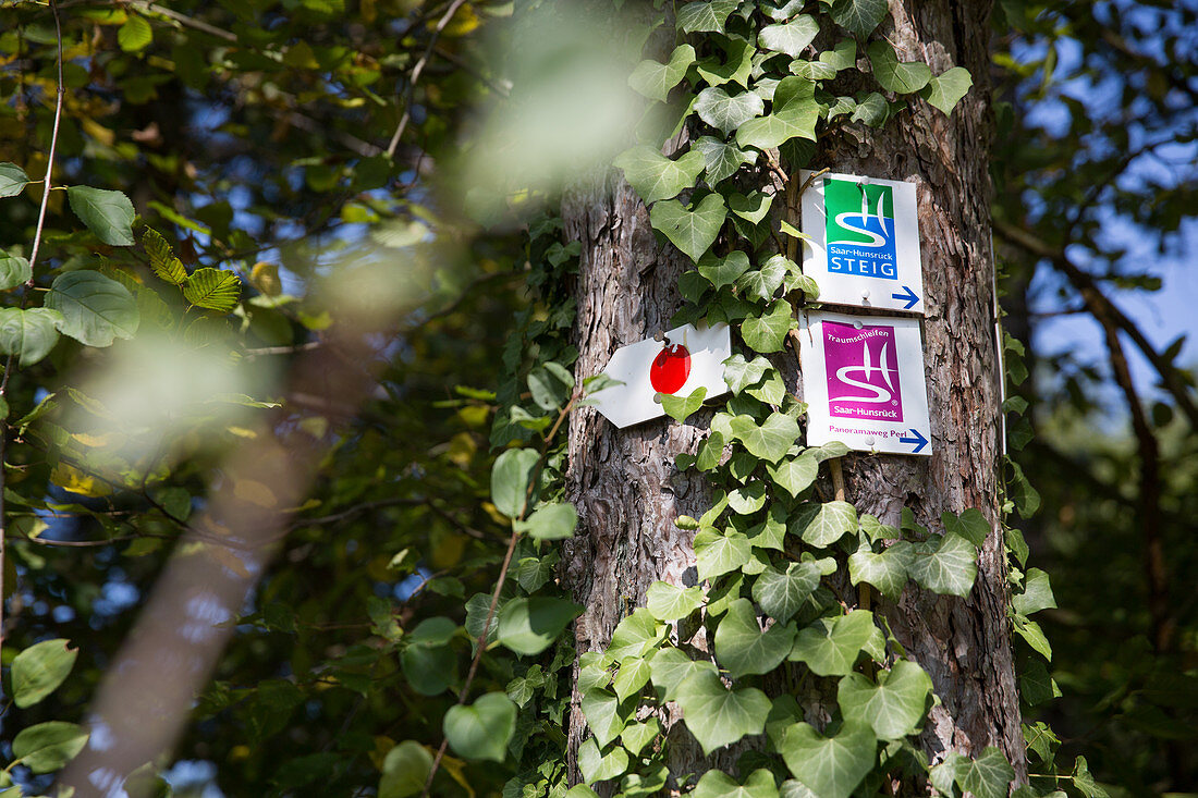 Hiking route signs on a tree