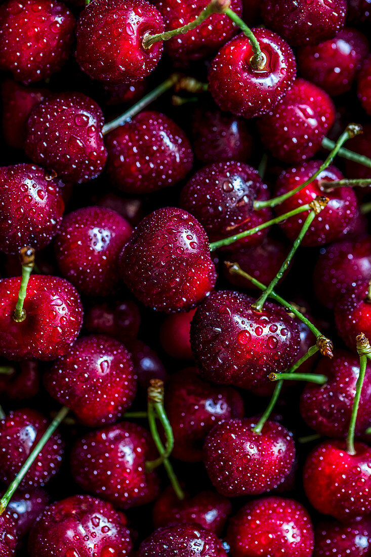 Macro shot of fresh cherries, with water drops