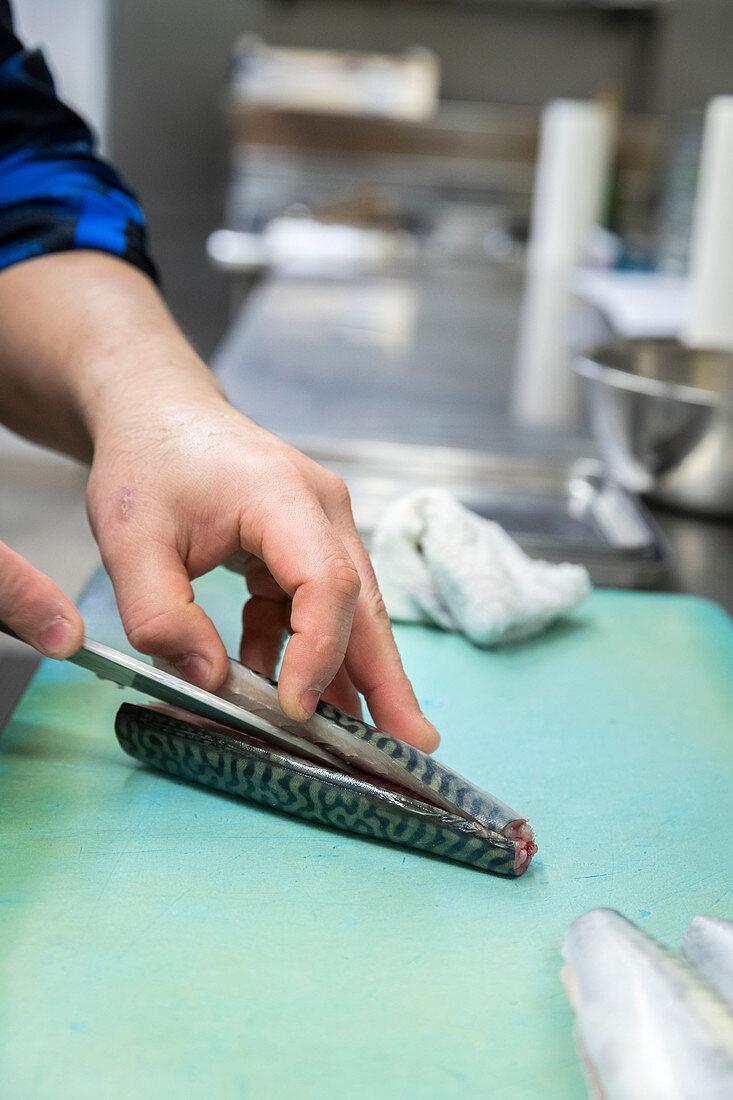 A mackerel being filleted