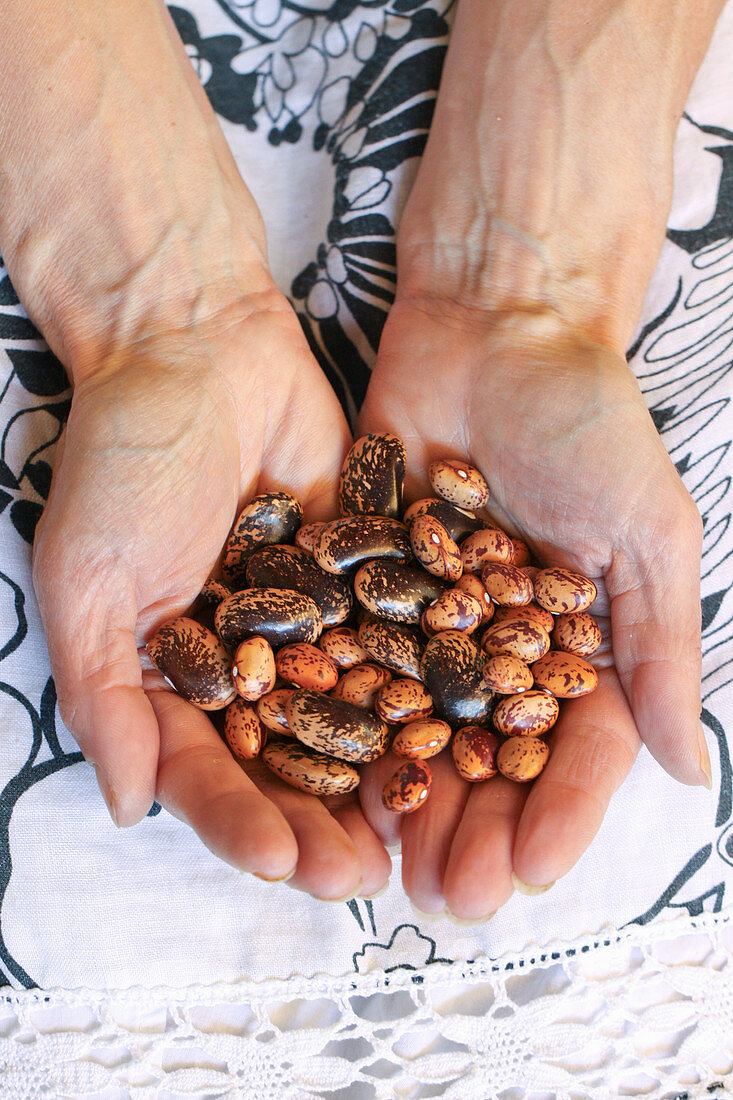 Handful of dried Borlotti beans (variety called Borlotto Lingua di Fuoco) and Runner Beans (Painted Lady)