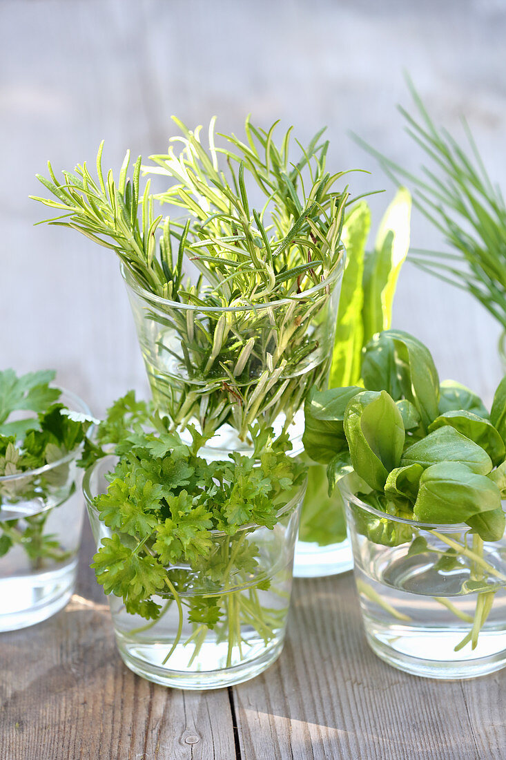 Various fresh herbs in glasses of water on a wooden table