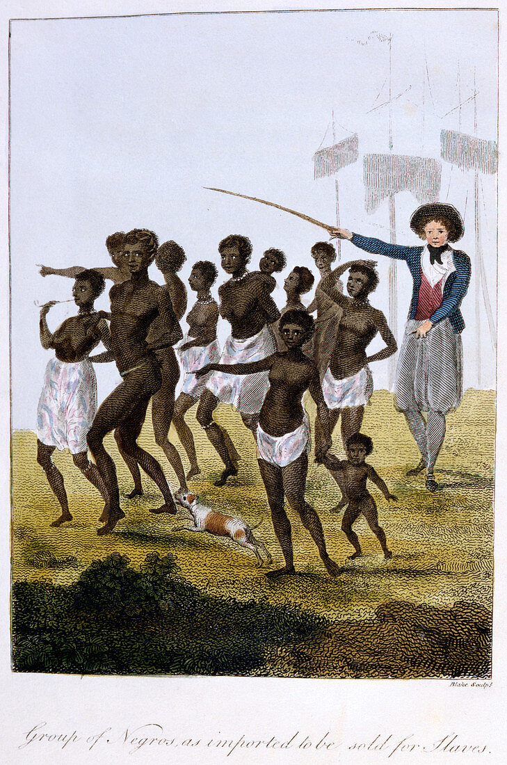 Group of Negros, as imported to be sold for Slaves', Surinam